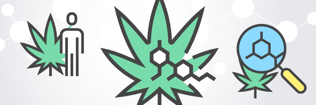 Cannabis Bob Blog