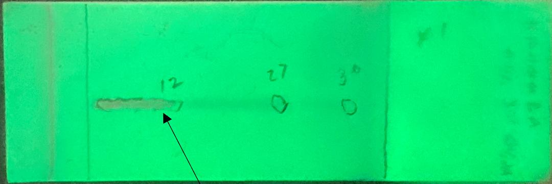 BIOMARK002.b.169 - Messy Reaction be green Header