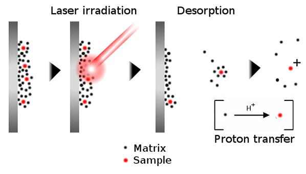 MALDI ionization-1