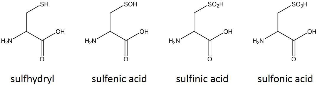 figure-3-cysteine-forms